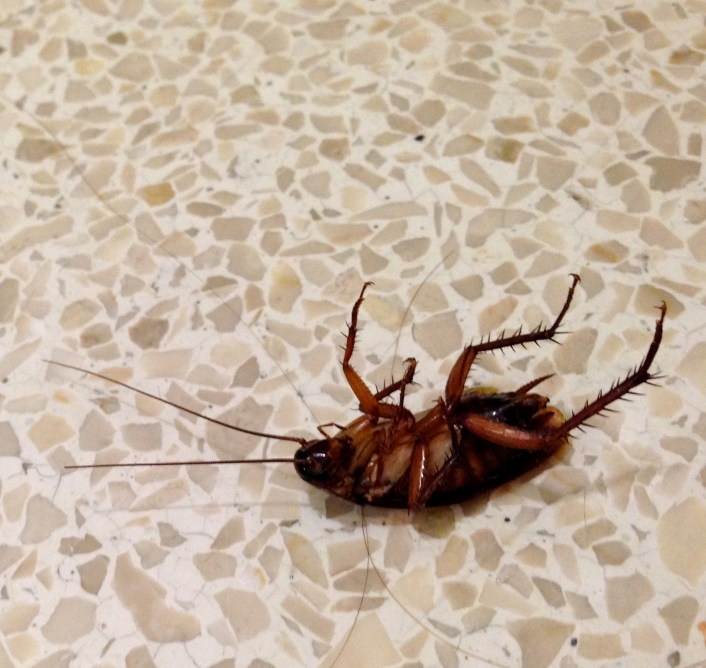 Cockroach on my first day...